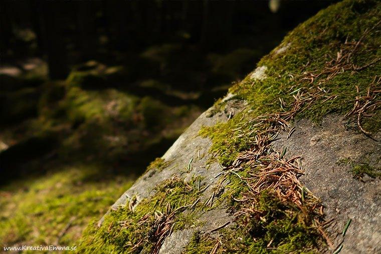 sten med mossa och barr i skogen