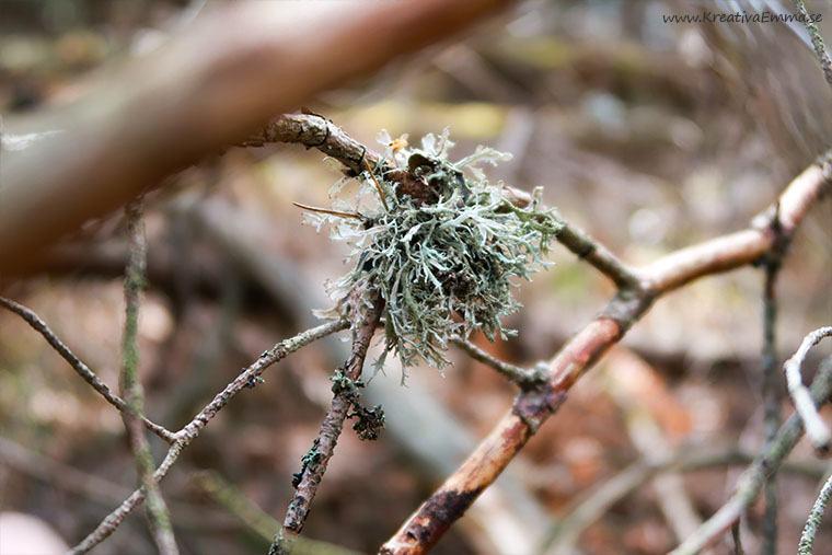 lav på gren i skogen
